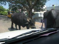 Chennai3